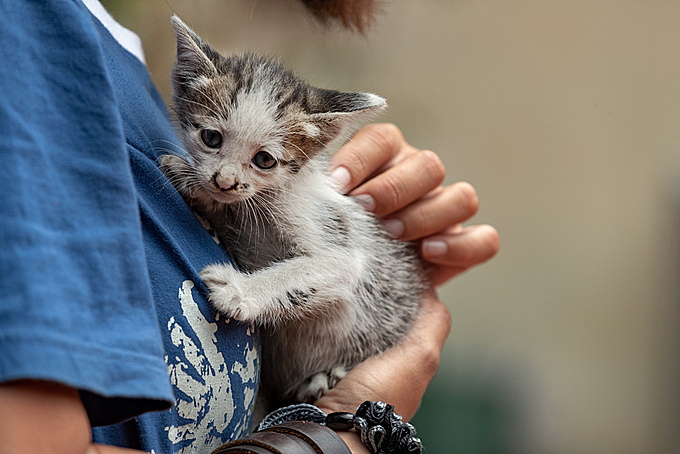 A young woman cuddles a kitten. Photo by Shuttlestock/Yavuz Sariyildiz.