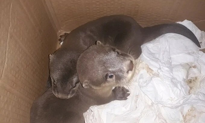 15 endangered otters rescued in central Vietnam