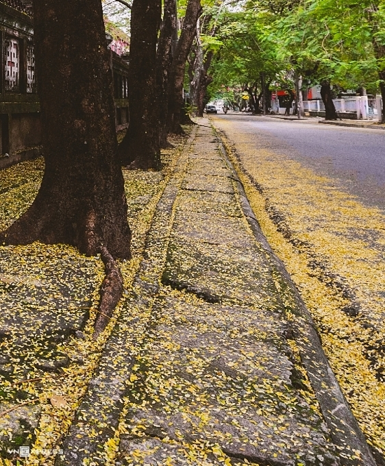 Many streets in Hue are referred to as flying flamboyant leaf streets. They have been the muse of many poets and song writers.