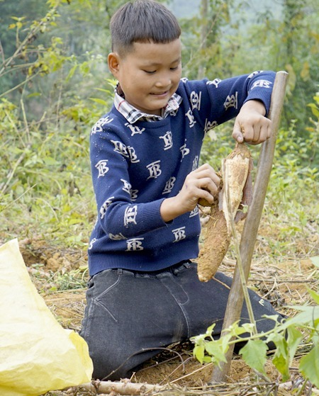 Khuyen is delighted he could dig up a big cassava root. Photo by VnExpress/Trong Nghia.