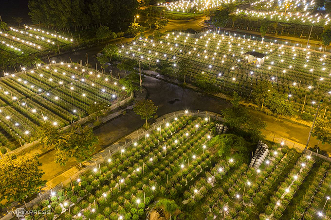 Nguyen Phong, the Hue photgrapher who took these photos, said he lighting system of the daisy garden reminds him of glowing stars in the night sky.