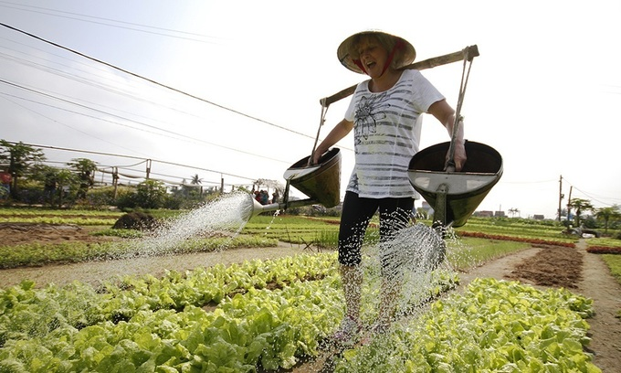 Cultivate vegetables, grow knowledge in Hoi An village