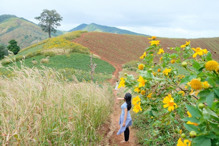 Chu Dang Ya Mountain, or wild ginger root in Jrai, is blessed with a variety of wild sunflowers endemic to Chu Pah District, Gia Lai Province, about 30 kilometers from Gia Lais capital Pleiku. The pan-shaped volcano dates back millions of years, providing shelter to remains of HBau Church.