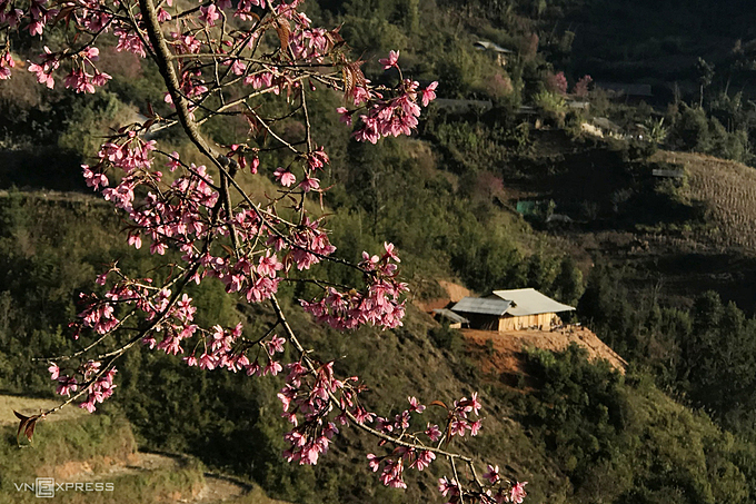 Le Trung Kien, a local teacher in Mu Cang Chai and also author of this photo collection, said the H'Mong don't know when the first peach tree appeared but that they herald the approach of spring.