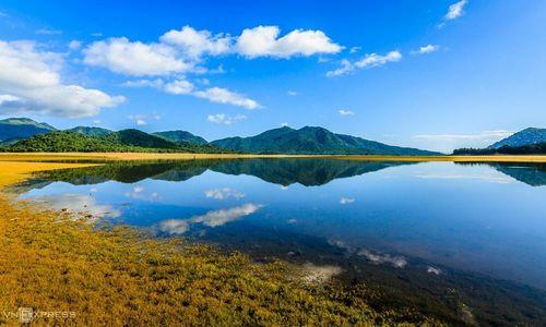 A golden prairie surfaces in central Vietnam lake