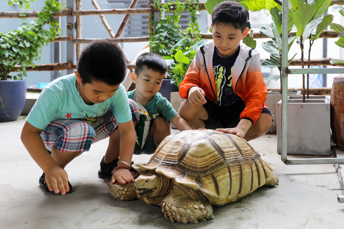 There is also an African spurred tortoise, also called the sulcata tortoise, that roams around freely in the shop.