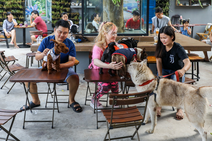 Visitors to Pet Coffee Garden at 91 A Binh Long Street, Binh Tan District, can snuggles with dogs, cats and other animals of the café and have the option the bring their own pet.