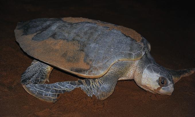 Man jailed for storing meat, eggs of endangered turtle