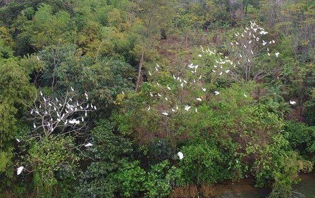 Storks flock to river island in Hue