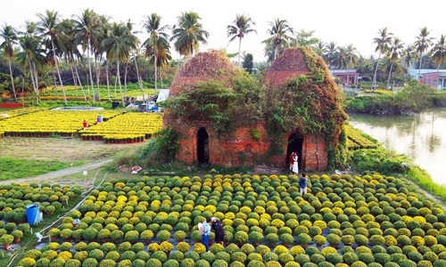 Mekong Delta flower village cultivates Tet spirit