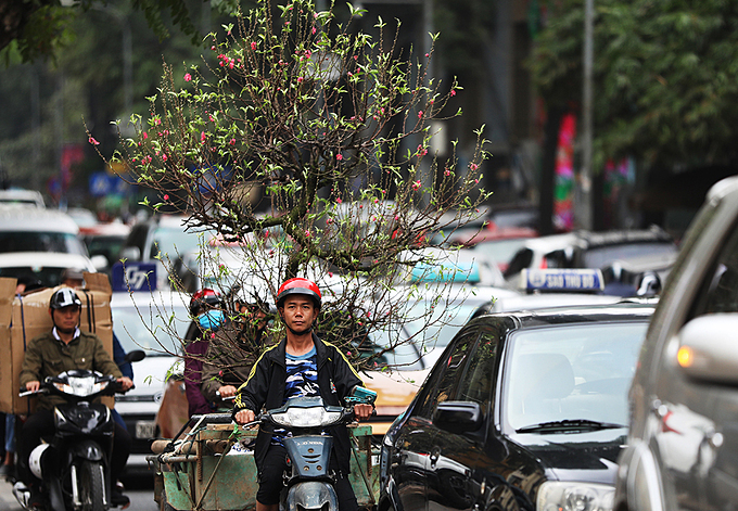 A delivery man carries a peach blossom tree, an indispensable house decoration for Tet in northern Vietnam, on Tran Binh Trong Street in downtown Hanoi.At 9 a.m. on Thursday, cars and other vehicles are stuck in a traffic jam on the 800-meter-long street.