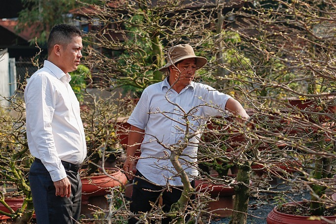 Nguyen Van Loc (R), owner of a garden house on Pham Van Dong Street, introduces pots of apricot trees for a customer. This job is no less difficult than farmers and the wholeyear we only lookforward to Tet holiday to boost income, he said.This year the weather is quite good, so the care and trade are also more favorable, said Loc, who has more than 20 years of experience in growing apricot blossoms.