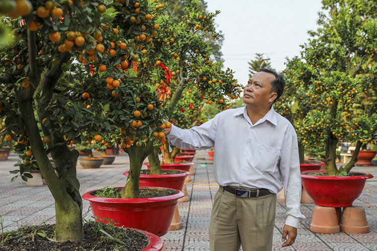 Do Quang Binh has decided to hire a kumquat tree for VND30 million. He gets a deal to keep it for half a month starting Sunday.