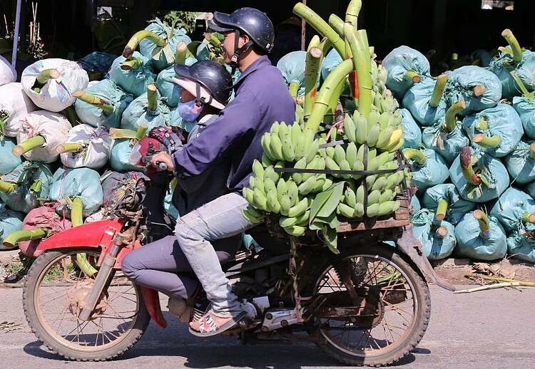 Tan Long Banana Market is opened until the afternoon of the last day of the lunar calendar this year, or January 24.