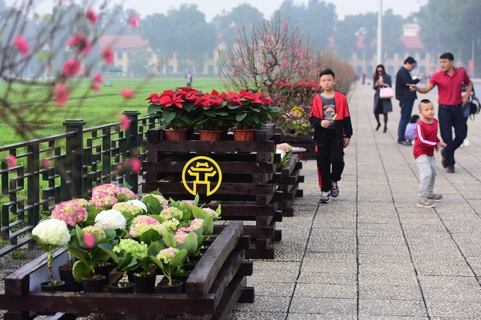 Pots of numerous plants like peach blossoms or hydrangeas are placed on the Ba Dinh Square.