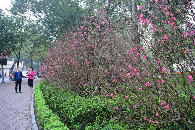 Several peach blossoms have bloomed early due to the warm weather.