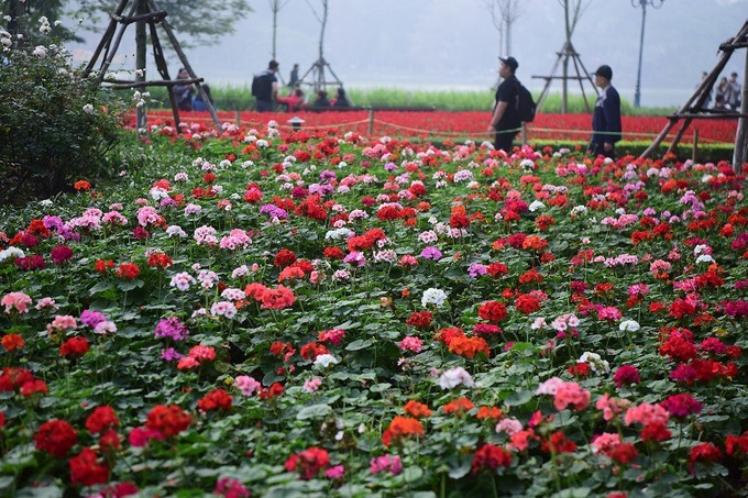 Flower beds span across numerous streets like Hoang Van Thu, Dinh Tien Hoang or Tran Khat Chan. The decorating of Hanoi streets is expected to finish Wednesday.
