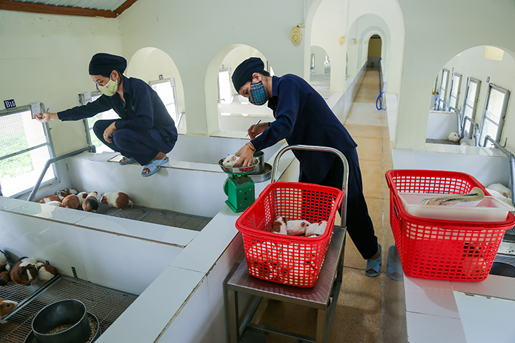 The staff in the farm weigh and check on the guinea pigs and mice. Photo by VnExpress/Xuan Ngoc.