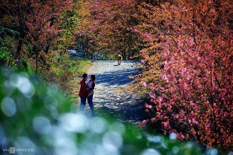 A couple, and a dog, is framed by blossoming trees on a hill in Sa Pa Town, northern Lao Cai Province. Photo by Nguyen Tan Tuan.