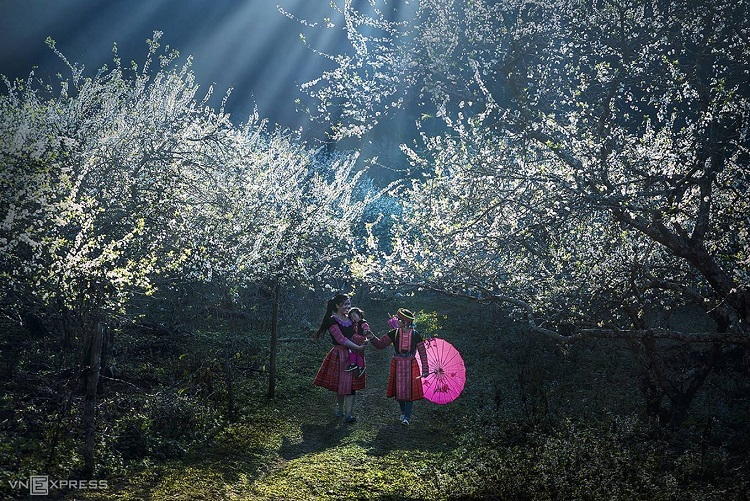 Hmong girls pass beneath plum trees in Moc Chau District, northern Son La Province. Photo by Tran Bao Hoa.