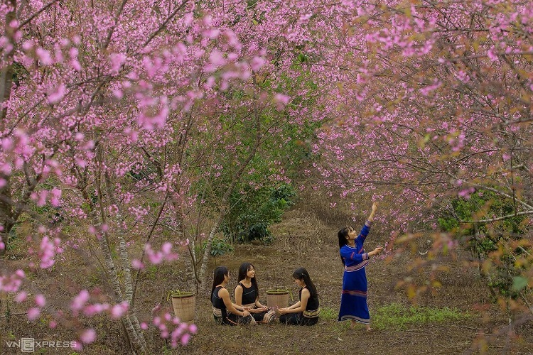 Members of the ethnic Ba Na pick flowers in Kon Plong District of Central Highlands Kon Tum Province. Photo by Nguyen Ngoc Thai (Thai Bana