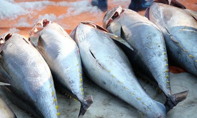 Tuna exports to US surge