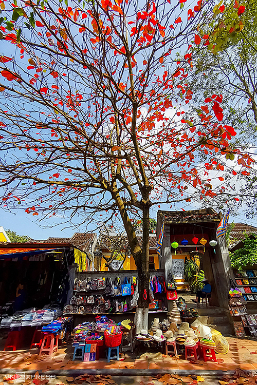 A shop selling souvenirs on Nguyen Thi Minh Khai street is shaded by the almond tree with leaves turning red colors.