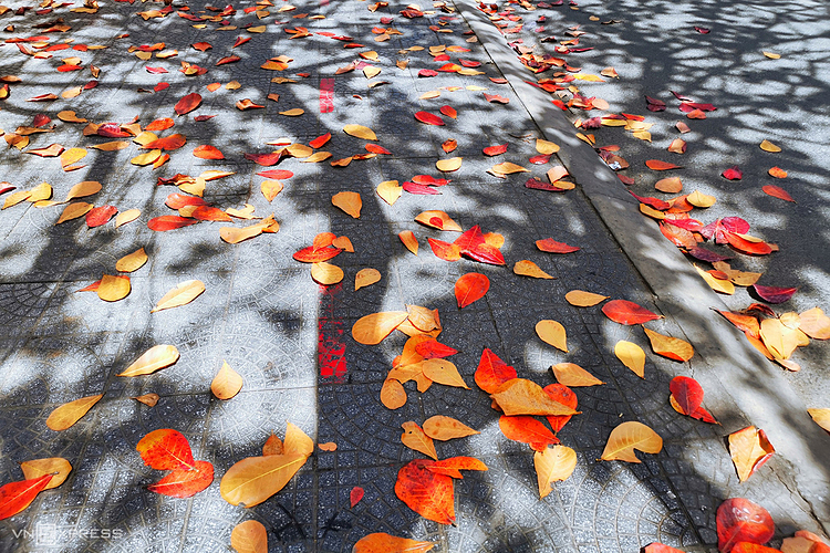 A mattress of red almond tree leaves on a street sidewalk in Hoi An.