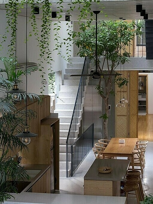 Grapefruit and starfruit trees, all familiar to Vietnamese, are planted in the house. An automatic watering system also help homeowners save time when it comes to taking care of the trees. Photo by Oddo Architects.