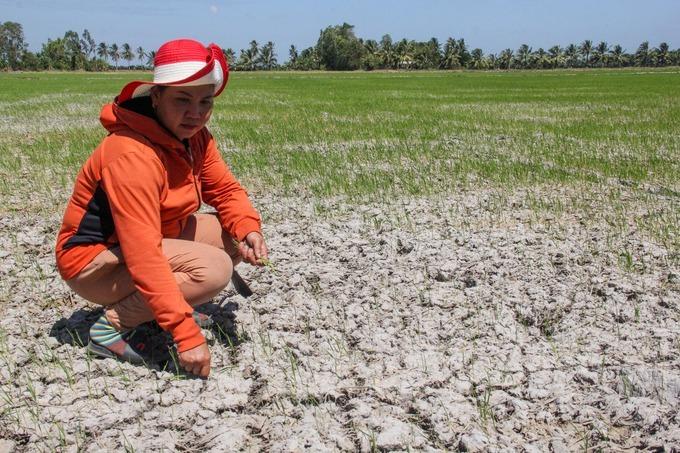 Nguyen Thi Nhien, 38, checks a patch of dried soil in Long Phu District, Soc Trang Province. Photo by VnExpress/Cuu Long.