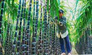 Vietnam PM assures ASEAN sugar import tariffs are history
