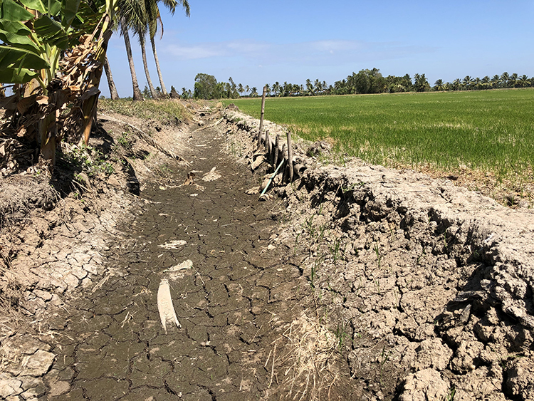 A drainage to provide water for a paddy field in Long Phu District of Soc Trang Province in the Mekong Delta runs dry on January 22, 2020. Photo by VnExpress/Huy Phong