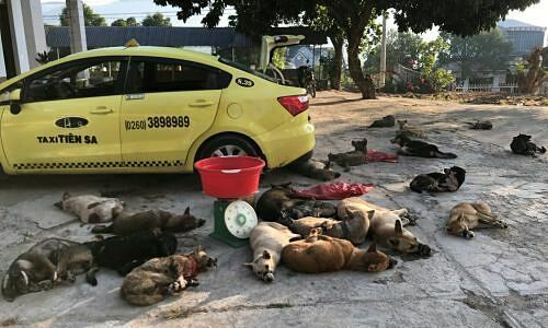Two arrested for transporting 22 stolen dogs by taxi