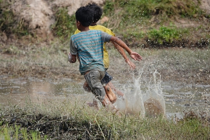 Buffalos are not the only racers in the festival where many kids play tag along the rice field.