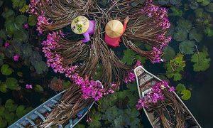 Water lilies harvest shot nets Vietnamese lenswoman top int'l prize