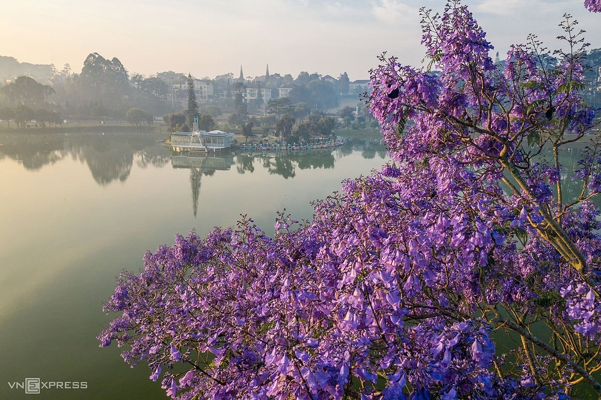 Flowers bloom brightly along the banks of Xuan Huong Lake, considered as a symbol of Da Lat.