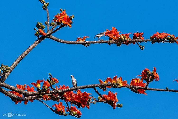 The vivid red flowers attract birds in search of nectar.