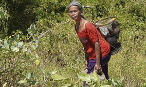 Parched Central Highlands stares at a bleak harvest season