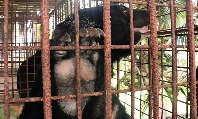 Vietnam scores poorly in protecting animals: study