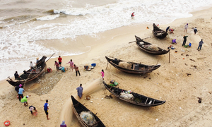 When sardines dot a beach in central Vietnam