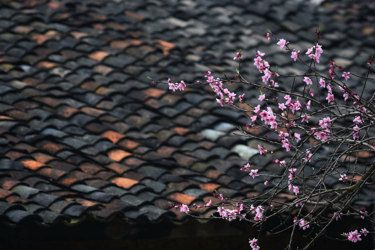 Peach flowers stand out against moss-covered yin-yang roofs.]