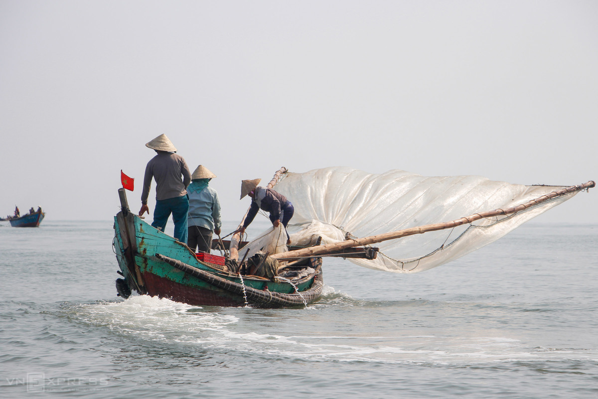 These past three days, fishing boats crowd Thuan An estuary in Hai Duong Commune of Huong Tra Township. From early morning, fisherfolk from Phu Thuan Commune in Phu Vang District head out in bamboo fishing vessels to catch shrimp, using a triangular tight-knit net. Once there is a sizable stack of shrimp, fishers lower the net and scoop the gains into the boat. On average, one vessel catches 100-200 kilograms each morning.