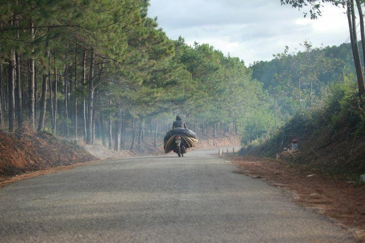 Pine trees linealong a road in Mang Den township. Photo by Xu Kien.