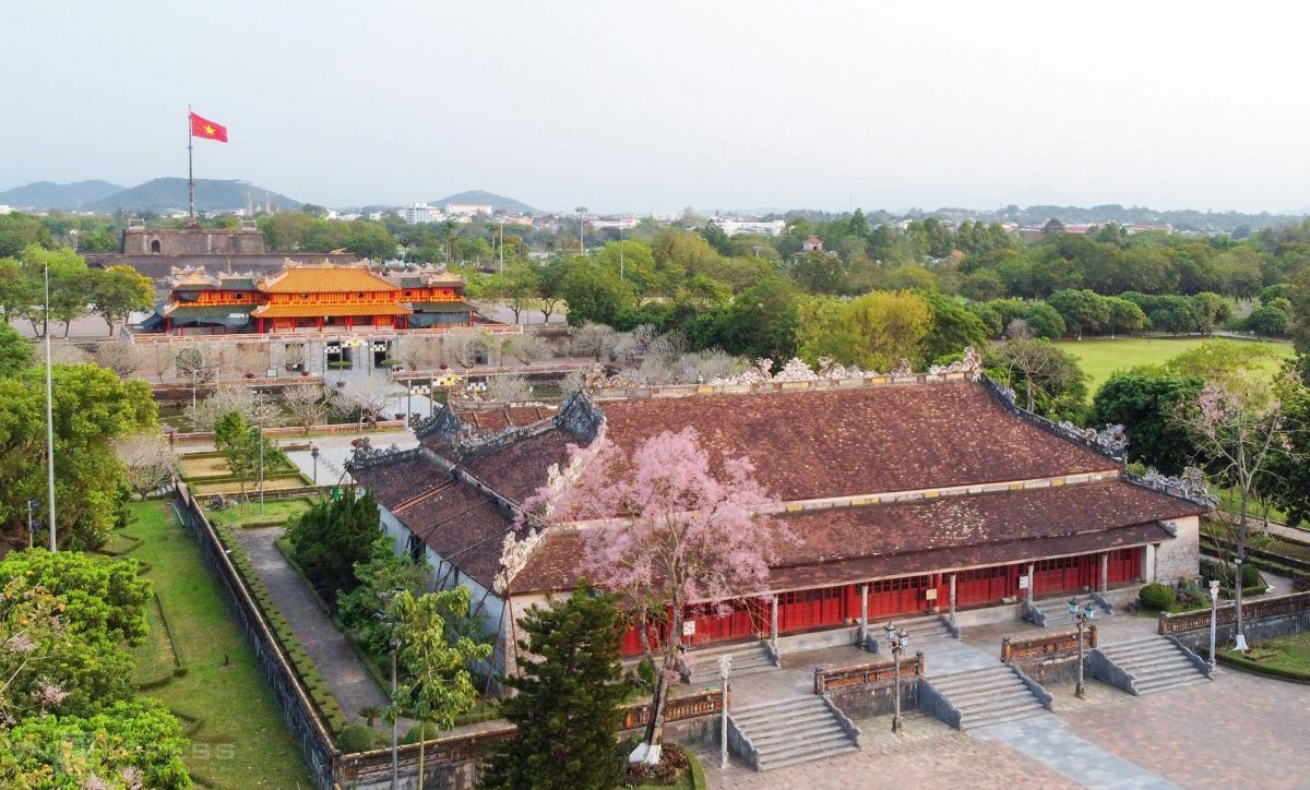 An eerie quiet has set upon the former Imperial City, ordered to close due to Covid-19. These days, vibrant parasol flowers also known as hoa ngo dong tickle the landmark pink.