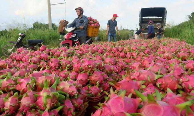 Coronavirus hits Vietnam's fruit exports to biggest market, China