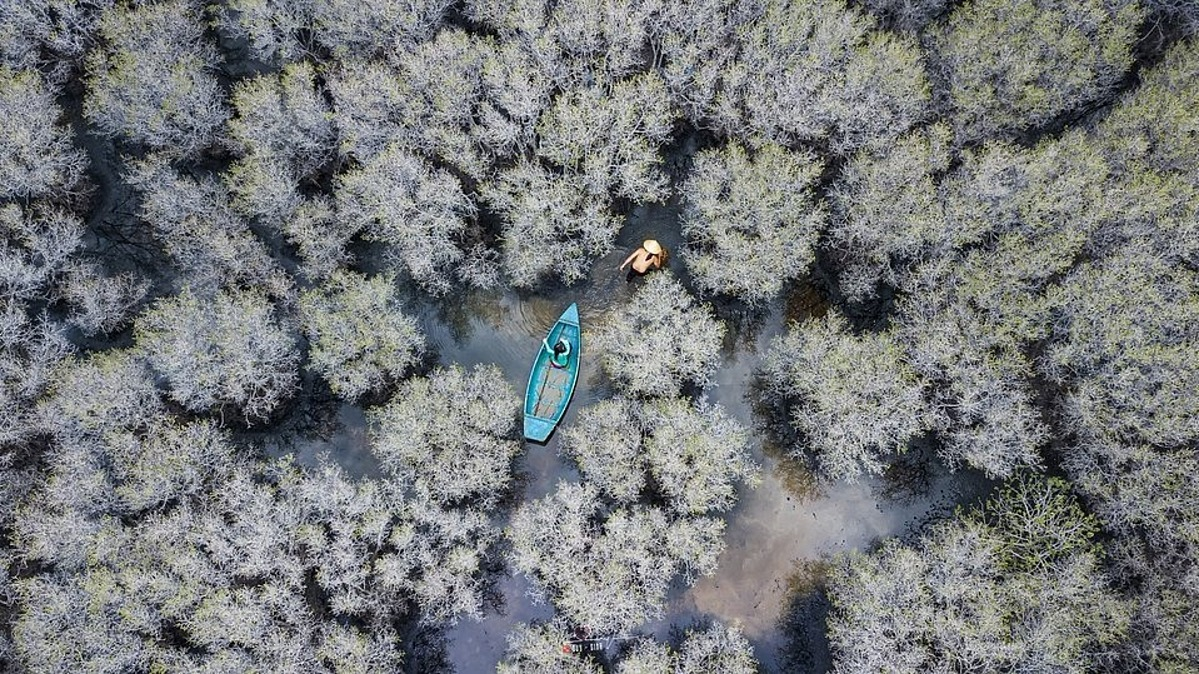 Local fishermen catch fish inside the Bau Ca Cai mangrove forest in Binh Son District in the central province of Quang Ngai. It is home to 50 ha of Lumnitzera racemosa Willd (commonly known as white flowered black mangrove).The shot is taken by photographer Duy Sinh.