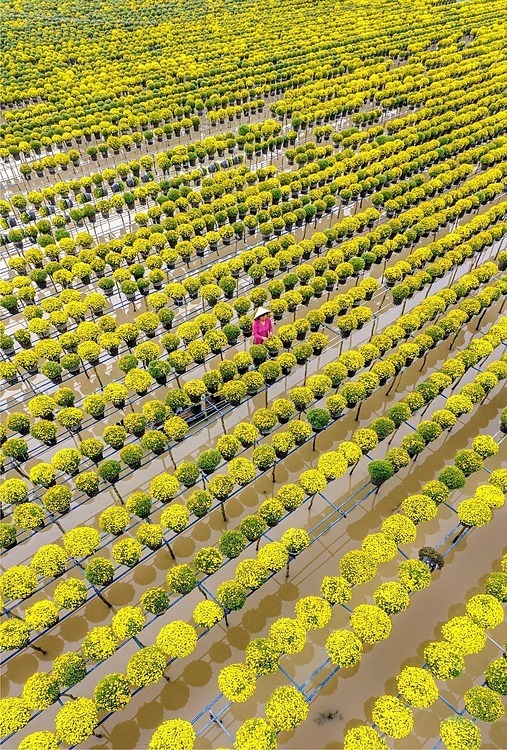 A photo taken by Thuan Vo captures a woman taking care of baskets of flowers in Sa Dec flower village in the Mekong Delta province of Dong Thap.