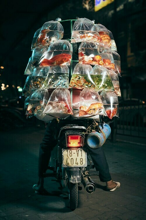 A photo of a man poses with his scooter in Hanoi with a delivery of pet fish. Photo taken by Jon Enoch in February 2019.