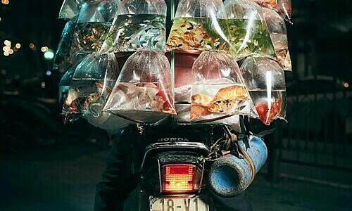 Vietnam ornamental fish seller photo wins grand Smithsonian prize