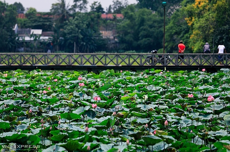 According to the records, Tinh Tam Lake or Tinh Lake, a famous attraction in the city is rectangular, with a circumference of nearly 1,500m. On the lake are three little islands Bong Lai, Phuong Truong and Doanh Chau.In the photo is the Hong Cu Bridge that leads to Bong Lai Island, with lotus are planted underneath. Recently, Tinh Lake has been renovated to create a better water environment to help lotus grow and bloom.